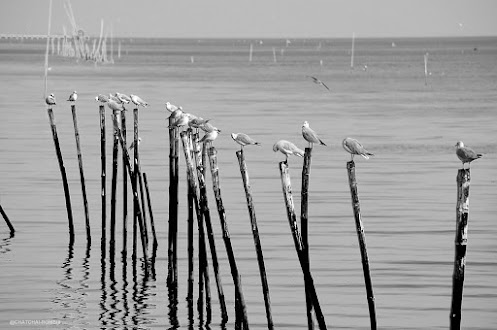 For #hqspbirds +HQSP Birdscurated by +Marina Versaci& +Joe Urbz And #hqspmonochrome +HQSP Monochrome...