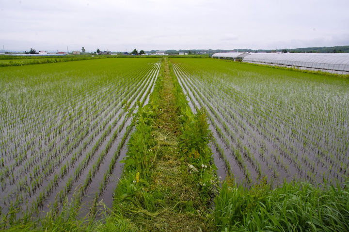 有機栽培の畦・草刈り中