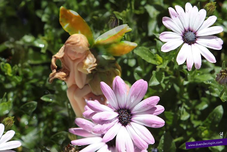 El Hada de la Primavera... ¡qué bonitas han nacido estas margaritas!