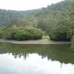 Berowra Creek just out of Crosslands (6382)