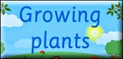 http://www.bbc.co.uk/schools/scienceclips/ages/5_6/growing_plants.shtml