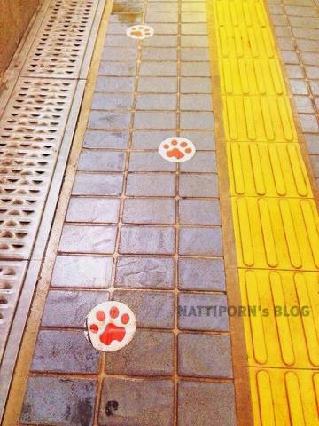 ทริปเยี่ยมญาติ Japan 2014 Wakayama นั่งรถไฟไปดูแมว