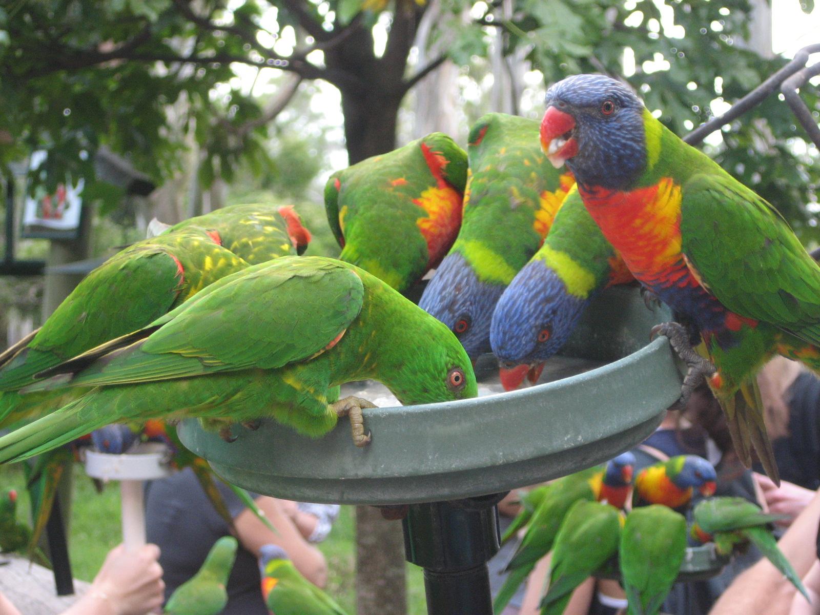 Australian Eläimiä