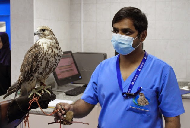 Holding a Falcon at the Falcon Hospital in Abu Dhabi