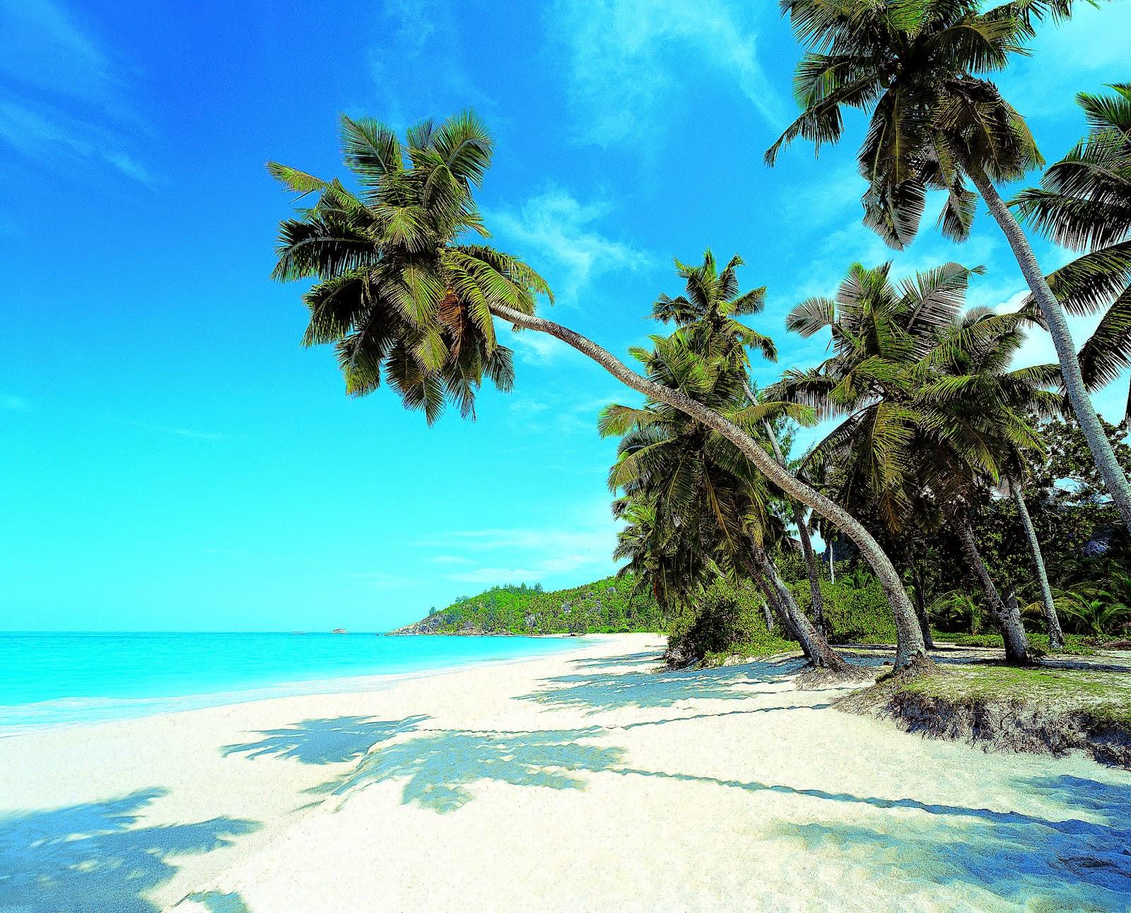 Exotic Palm Beach Wallpaper 3200x2358