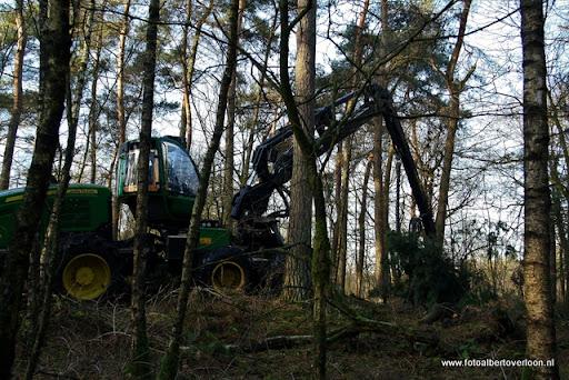 Houtoogst in de bossen van overloon 17-01-2012 (3).JPG