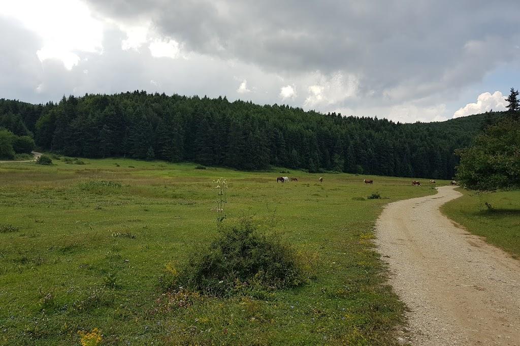 At Yaylası , Bolu