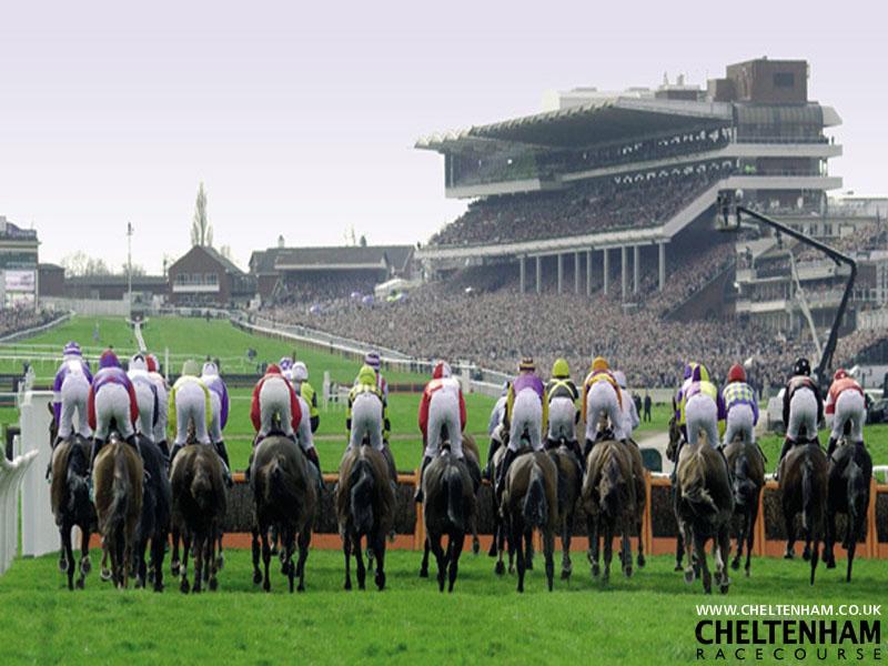 cheltenham horse racing