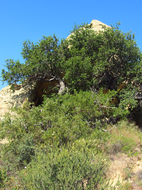 the mouth of a small cave hidden by a stocky oak tree