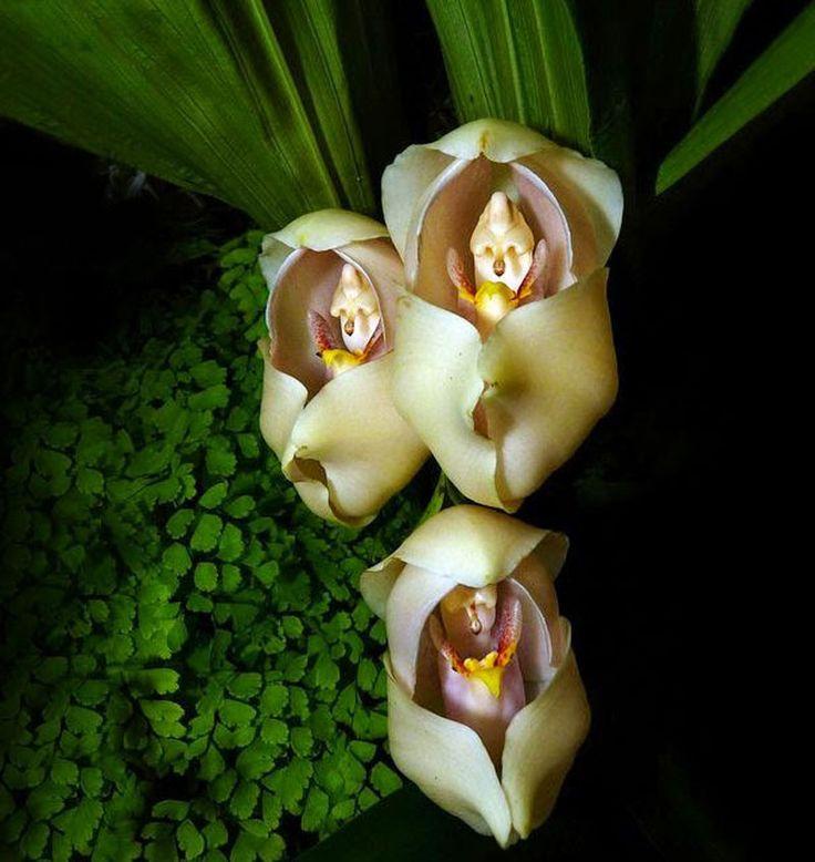 Hoa lạ với kiểu dáng đẹp