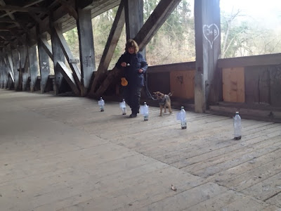 Slalom und Geschicklichkeit am Hunde-Plauschparcours.
