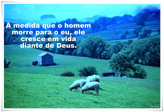 PEROLAS DA VIDA - 05