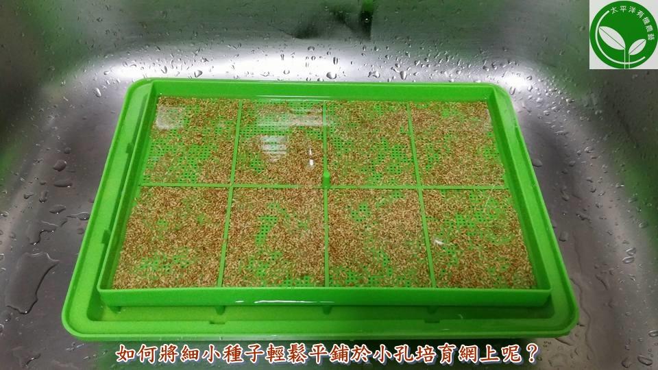 有機芽菜水耕盤,輕鬆平鋪種子