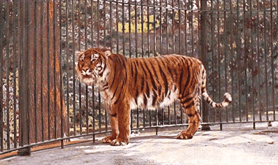 Eurogenes Blog: Tigers and Proto-Indo-Europeans