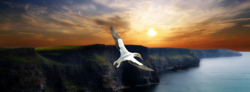 Wing flight facebook cover