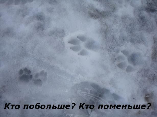 фотозагадки про следы