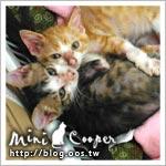 2cats ★ 活力旺的癩痢貓 Mini & Cooper