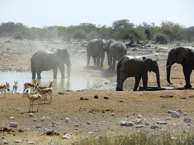 أفضل ما في أفريقيا  Best of Africa Namibia_180807124654