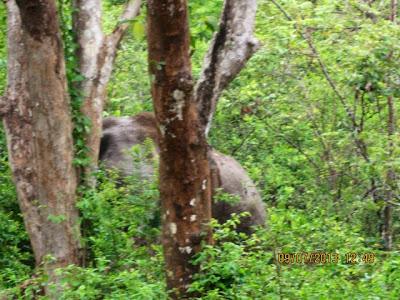 WILBER The Bull Elephant
