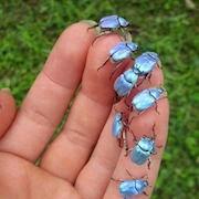 К чему снятся жуки на теле?