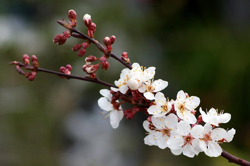 Março é o Mês da Primavera