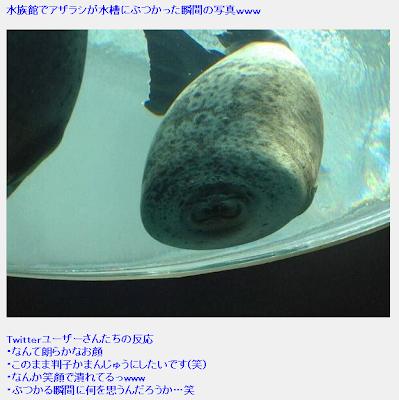 「水族館でアザラシが水槽にぶつかった瞬間の写真」は、どこのアザラシで誰が撮影したのか