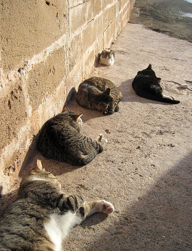 Moroccan community cats