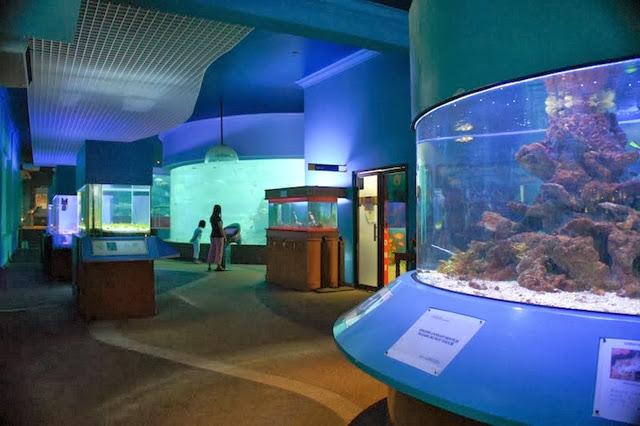 Muzium-Marin-Akuarium-UMS-Aquarium-Marine-Museum