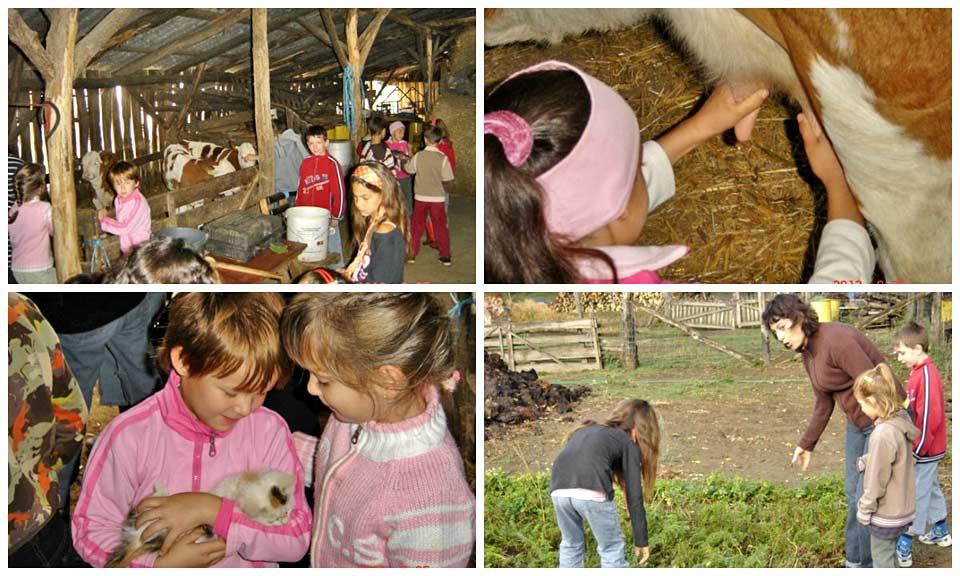 Látogatás a családi gazdaságba Bárdudvarnok