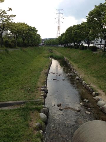 せせらぎ公園の小川