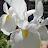 Kirk S avatar image