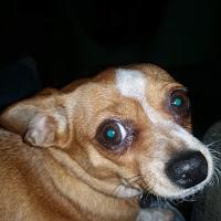 EMMANUEL martz's avatar