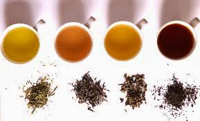importance and health benefits of tea to our body