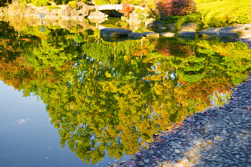 府中の森公園 紅葉 写真3