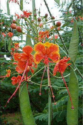Curiosa y bella flor en el campement