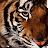 Sarah Khokhar avatar image