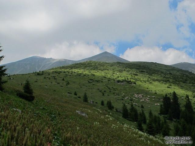 Retezat Trail Race - Culmea Marii