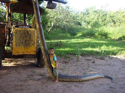 pic - First Anaconda Found and Killed in Sri Lanka