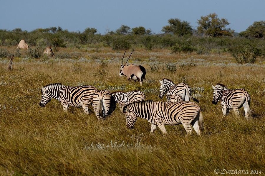 Namibia+2014_090.JPG