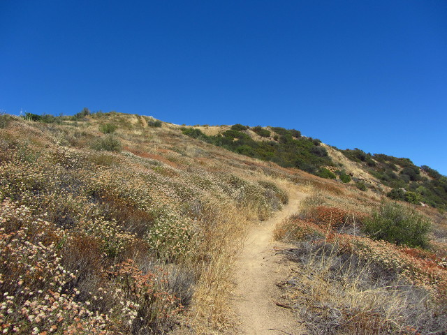 trail winding through buckwheat