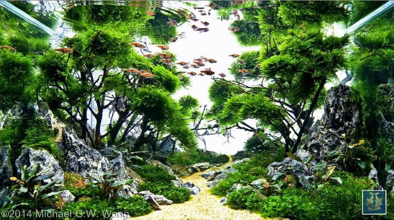 Vinh Aqua giới thiệu bộ sưu tập hồ thủy sinh rừng (phần 2)