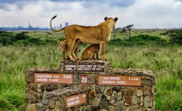 Férias no Quénia