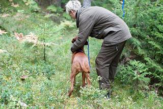 Naja starta på eftersöks prov i Augusti 2011 och fick 10poäng på spårarbetet. Bild domaren Kjell Mattsson