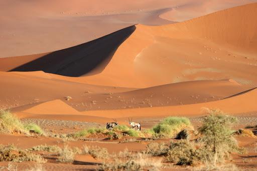 Dve antilopi sredi puščave Namib