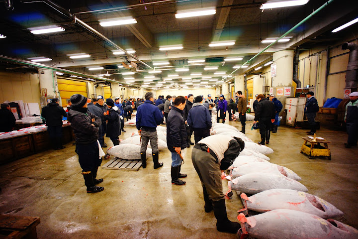 tuna inspection tsukiji