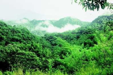 hutan1 Keanekaragaman hayati (biodiversitas)
