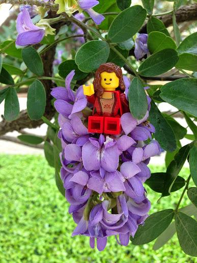 shrub-sigyn-sophora.jpg