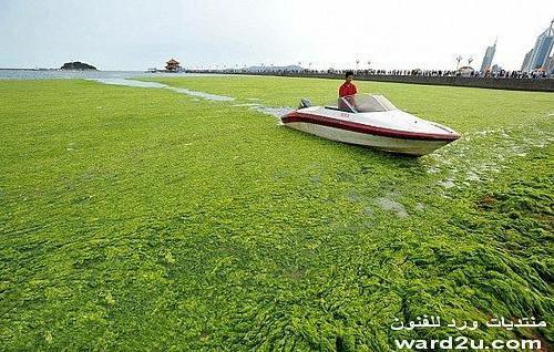 شواطئ الصين رايقه جدا