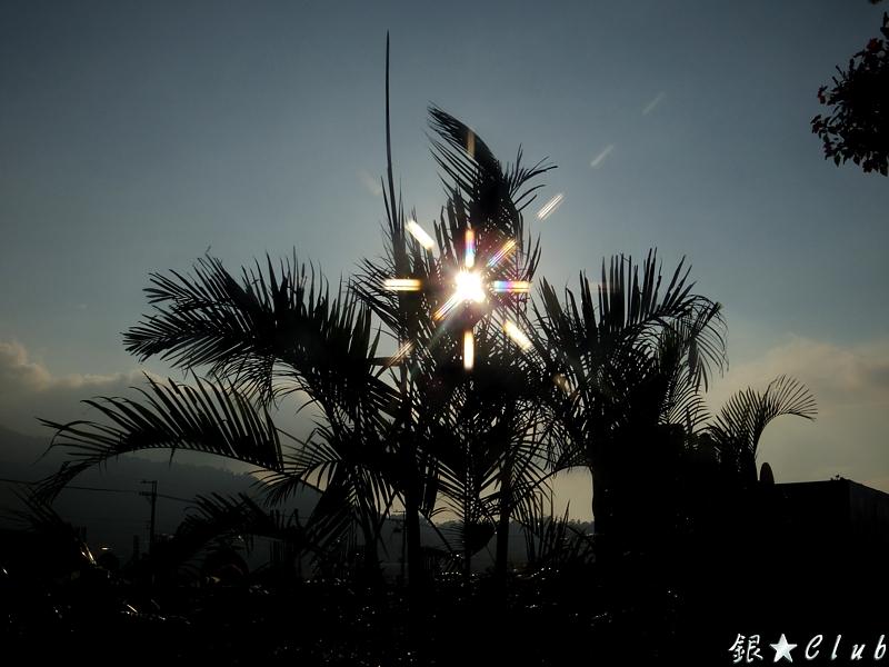 2011新社花海(Q+R)