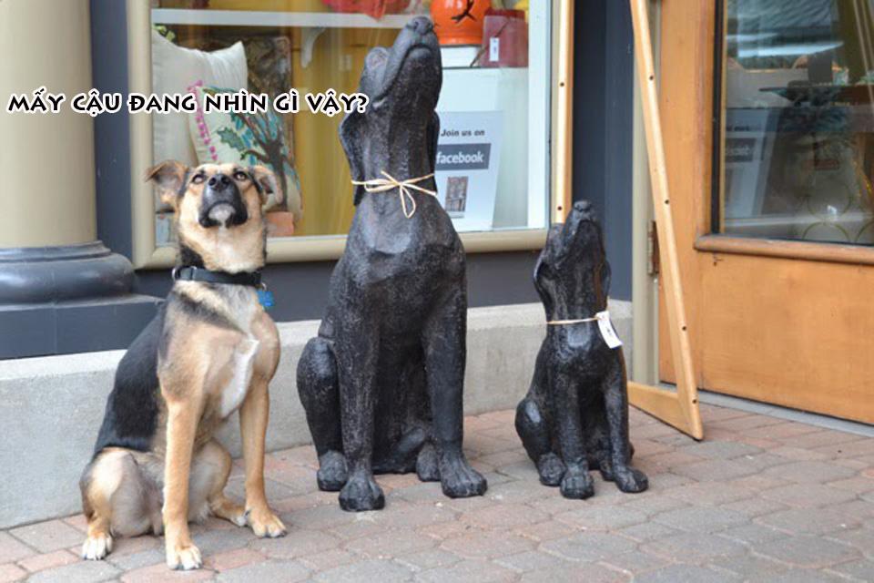 Ảnh chế về loài chó